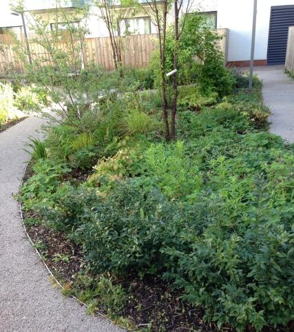 formatted_waiteshouses_planting